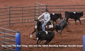 2016 AQHA Amateur Ranch Sorting